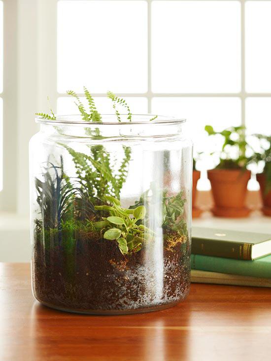 Easy steps to create terrarium