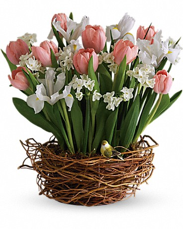 teleflora tulips and narcissus with bird in basket